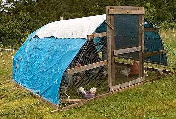 hoophouse chicken coop for broilers