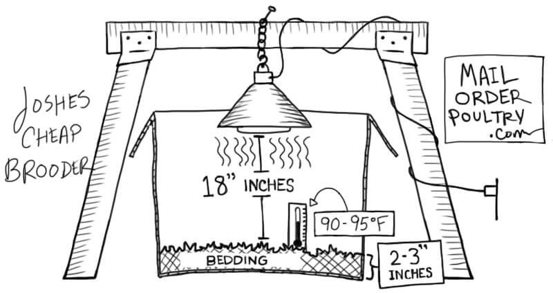 Correct use of brooder lamp (Picture from mailorderpoultry.com