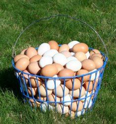 Wire Egg Baket