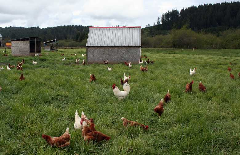 Simple houses on free range