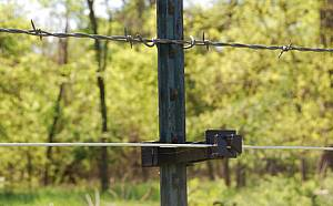 Chickens can be fenced by adding an electric wire to an existing fence.