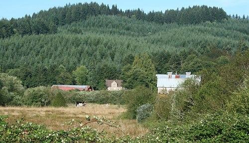 Norton Creek Farm