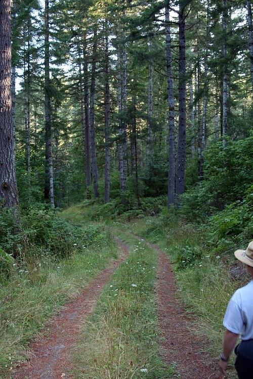 Walking through Starker Forest