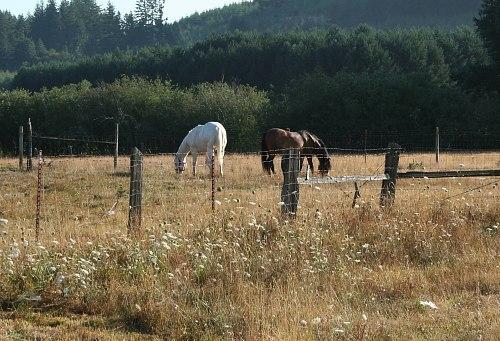 horses next door to Norton Creek Farm